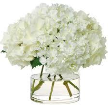 White Hydrangeas Heavenly White Hydrangeas