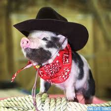 in costumes best 25 pig costumes ideas on baby costumes baby