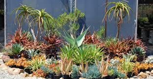 Succulent And Cacti Pictures Gallery Garden Design Serra Gardens Always A Succulent Sale Cacti Com