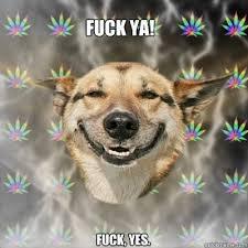 Fuck Ya Meme - fuck ya fuck yes stoner dog quickmeme