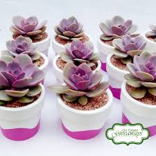 wedding souvenirs echeveria perle nurnberg succulents wedding souvenirs and