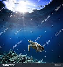 underwater wildlife animals divers adventures maldives stock photo