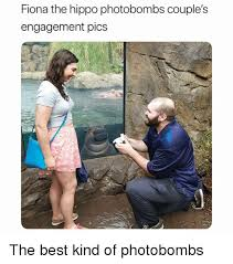 Engagement Meme - fiona the hippo photobombs couple s engagement pics the best kind of