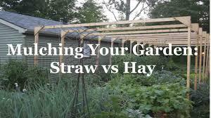 mulching your garden straw versus hay youtube