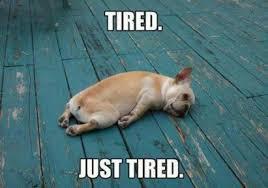 Im Sleepy Meme - the best sleep memes on the entire internet ghostbed