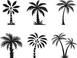 palm tree clip vector images illustrations istock