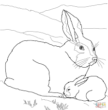 arctic hare baby and mother coloring page free printable