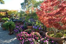 Container Garden Design Ideas Container Gardening Designs Ideas We Can Choose For Our Flower