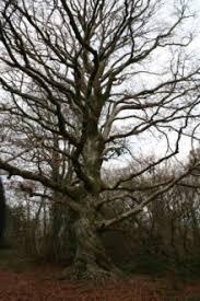 the mycological society activity 1 build a tree