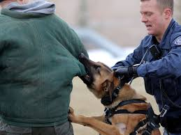 belgian malinois in movies police dog runs amok in calgary chasing 12 year old boy into his