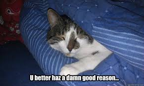 Sleepy Cat Meme - u better haz a damn good reason sleepy cat quickmeme