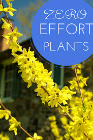 10 easy care plants for no effort plants for failproof landscaping in your yard lawn