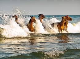 Maryland wild swimming images 22 beautiful u s beaches horse poem and surf jpg