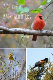 best 25 bird guides ideas on pinterest bird identification