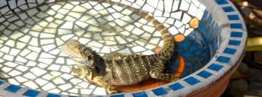 a lizard friendly garden
