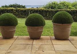 Lollipop Topiary Tree Artificial Topiary Trees Hedges U0026 Screens Topiary Etc