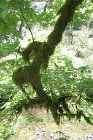 survival myth busted finding directions by tree moss survival