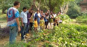 Urban Gardening Bangalore Book Tickets To Urban Farming Intensive Course