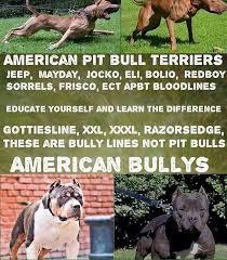 american pitbull terrier uk law fully legalise pitbulls in the uk home facebook