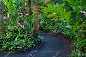 flowers and plants curving path winds through lush tropical flowers and plants in