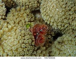 white worm coral stock images royalty free images u0026 vectors