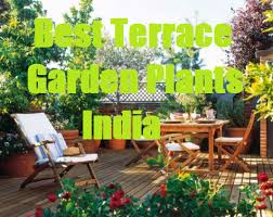 roof garden plants list of best terrace garden plants india best plants for rooftop