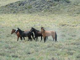 mustangs the rock band of pizona mustangs picture of rock creek pack station