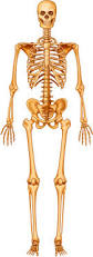 skeleton diagram with labels skeleton hip legs outline u2022 wiring