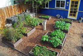 outdoor and patio raised backyard vegetable garden mixed with