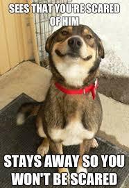 T Dog Memes - 21 funny dog memes