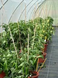 gem se pflanzen balkon gemüsepflanzen trends balkon gemüse garten selbstgemacht