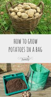 Growing Your Own Vegetable Garden by The 25 Best Grow Your Own Ideas On Pinterest Allotment Ideas