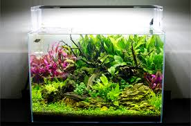 Aquascape Lighting Use Of Contrast In Aquascaping Scapefu Friday Challenge Scapefu