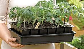 indoor planting how to start seeds germinating seeds gardener s supply