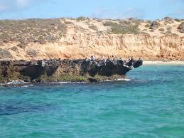 Wildfire Weed by Bernier U0026 Dorre Islands Nature Reserve Shark Bay