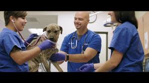Kingmont Mobile Home Park Houston Tx University Of Florida College Of Veterinary Medicine Youtube
