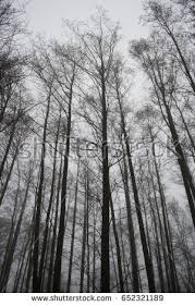 tim burton tree stock images royalty free images vectors