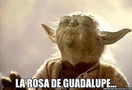 Rosa De Guadalupe Meme - la rosa de guadalupe wtf pinterest humor sarcasm and random