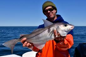 man holding deep sea cod u2013 reel deal fishing charters