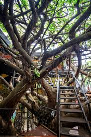 Treehouse Hotel In Costa Rica 15 Magical Treehouses You Won U0027t Believe Exist In Central America