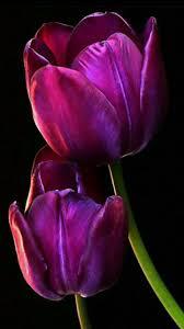 3133 best flowers images on pinterest flowers pretty flowers