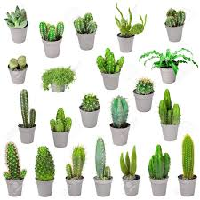 Indoor Plants Set Of Indoor Plants In Pots Cacti And Other Succulents Stock