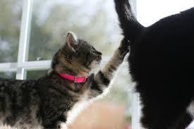 do cats mental floss