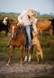 276 best cowboys cattle and horses images on pinterest horses