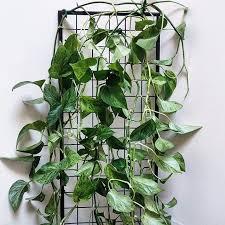 project profile freestanding planter trellis for house plant journal