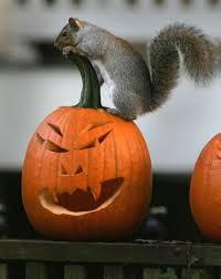 halloween pumpkin carving wcco cbs minnesota
