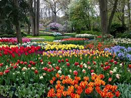 keukenhof flower gardens amawaterways enchanting rhine river cruise day 1 u0026 2 amsterdam