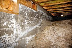 mold removal archives everdry basement waterproofing atlanta