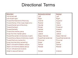 Planes And Anatomical Directions Worksheet Answers Introduction To Anatomy Physiology Ppt