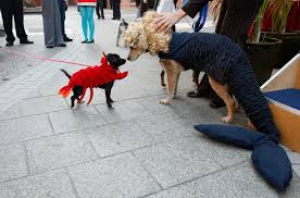 lobster halloween costumes one out of two pets wear halloween costumes cbs detroit